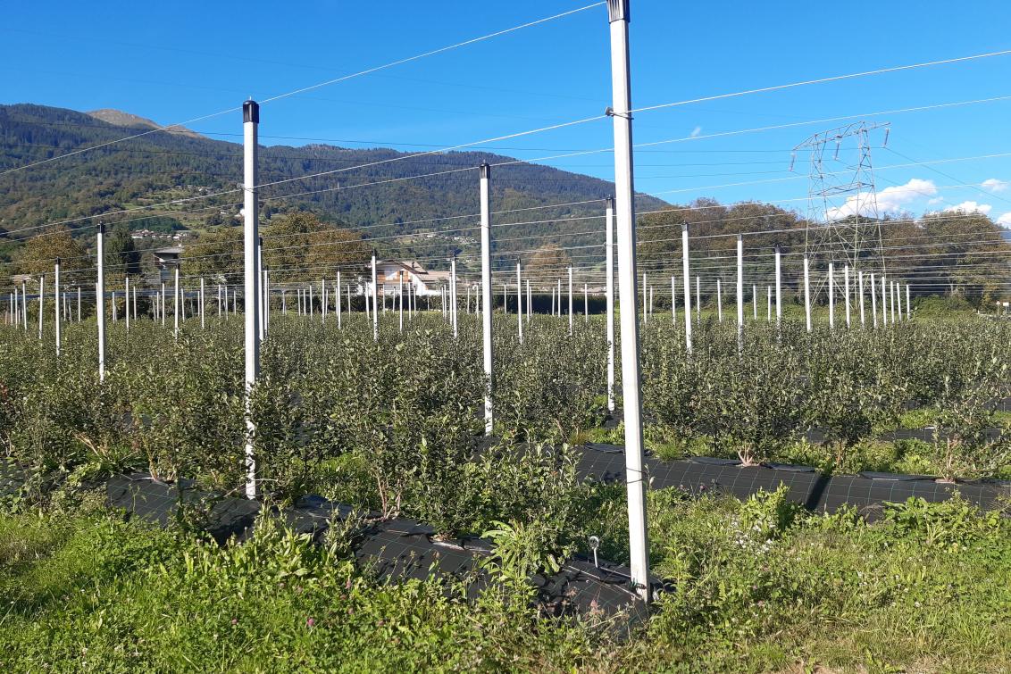 Livellamento agrario a Roncegno Terme