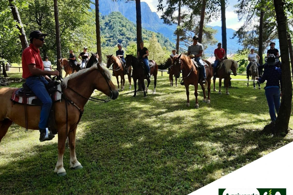 Assistente turismo equestre